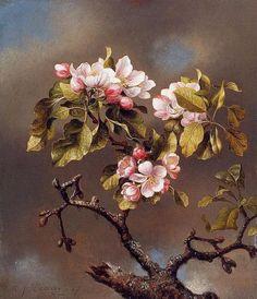 poboh:  Apple Blossoms, Martin Johnson Heade. American Hudson River School Painter (1819-1904)