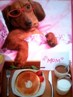 Happy Mothers Day to all the Doxie Moms!