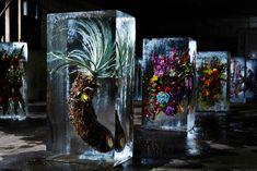 Azuma Makota Suspends Beautiful Flowers in Ice (11 pictures)