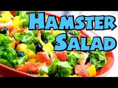 HOW TO: HAMSTER SALAD ~ Suitable for all Hamsters *HD* - YouTube