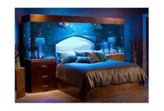 Wish | Fishtank Bed
