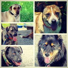 Gosh, just look at these gorgeous faces! #evasplaypupspa #endlessmountains #mountpleasant #dogsfordays