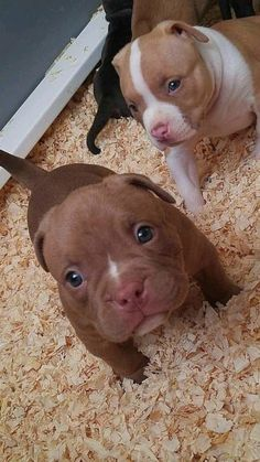 Baby Animals Pictures, Cute Animal Pictures, Animals And Pets, Cute Little Animals, Cute Funny Animals, Funny Dogs, Funny Puppies, Cute Baby Dogs, Cute Dogs And Puppies