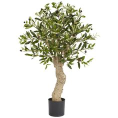 2 1/2' Silk Olive Tree ** Want additional info? Click on the image.