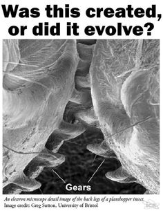 Evolution is a man-made myth? This is for a paper! PLz hlep! 10 pts best answer?