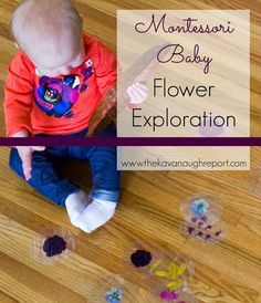 Laminated Flower Exploration for Babies and toddlers -- easy and beautiful way to explore flowers by laminating them! Would also be a fun light table exploration. Montessori Preschool, Toddler Preschool, Preschool Activities, Montessori Infant, Montessori Bedroom, Montessori Education, Baby Sensory, Sensory Play, Infant Sensory
