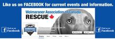 Weirmaraner Association of Canada