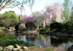 Mizumoto Anese Stroll Garden Springfield Mo Trees Blooming In Spring This Was Sooo Breathtakingly Beautiful Today