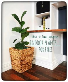 How to have gorgeous indoor plants for free - House of Hollingsworth Blog