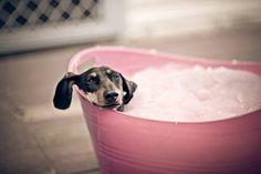 dog in tub, he is enjoying. :)