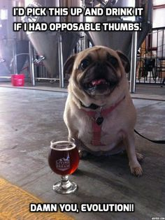 Pugs Unplugged #1 - Ever wonder what pugs are REALLY thinking??