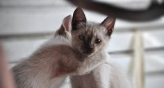 Humans Outlive Cats, So Why Do We Keep Them as Pets?  By T.J. Banks on August 11, 2014
