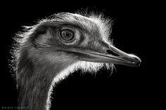 El fotógrafo Wolf Ademeit , tiene un peculiar estilo de fotografía, ya que es conocido por sus trabajos en los que muestra con todo lujo de...