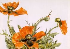 """dappledwithshadow: """" Red Poppies Charles Demuth 1929 Metropolitan Museum of Art - New York, NY (United States) Painting - watercolor Height: cm in. Charles Demuth, Art Beauté, Decoupage, Pop Art Movement, Orange Poppy, Cross Stitch Pictures, Needlepoint Patterns, Flower Oil, Red Poppies"""