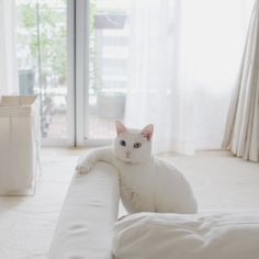 White cat, white room.