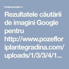 Creepypasta, Google Images, Kittens, Bad Girls, Kinky, Unicorn, Japanese, Fan, Children