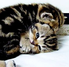 I collect cat gifs - Imgur