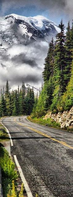 Mount Rainier National Park- Washington- USA