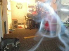 Real Ghost Pictures: The Peering Shadow Man - Paranormal 360 Spooky Pictures, Real Ghost Pictures, Ghost Photos, Spirit Ghost, Holy Spirit, Ghost Caught On Camera, Best Ghost Stories, Ghost Hauntings, Shadow People
