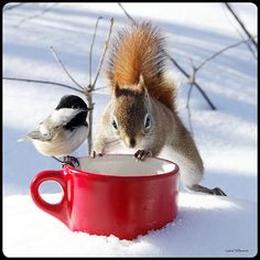 by Andre Villeneuve  coffee time, let's share!