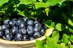 Blueberry, Fruit, Food, Berry, Essen, Meals, Yemek, Blueberries, Eten