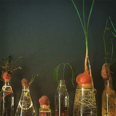 Spruitje @ Designkwartier Ivy Plants, Green Plants, Indoor Plants, Kitchen Herbs, Herb Planters, Plant Therapy, Little Plants, My Secret Garden, Flowering Trees