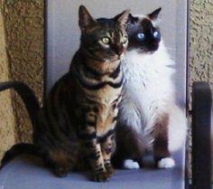 Hank & Howie