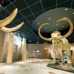 Arizona Museum of Natural History, Mesa, AZ.