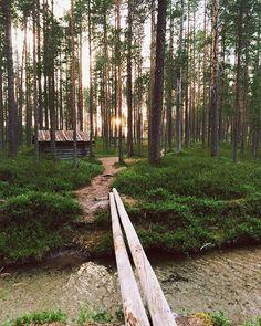 Silence in Hossa, Suomussalmi, Finland #aamukahvilla