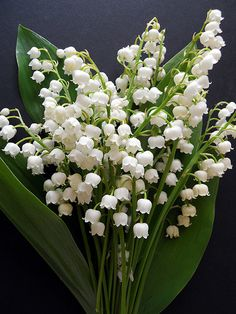 Lily of the valley/Convallaria majalis...one of my very favorite scented flowers