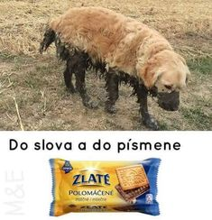 Do slova a do písmene Funny Photos, Funny Images, Animals And Pets, Cute Animals, Stupid Memes, Funny Moments, Funny Texts, The Funny, I Laughed