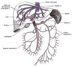 Lateral cerebral angiogram from KU Radiographic Anatomy ...