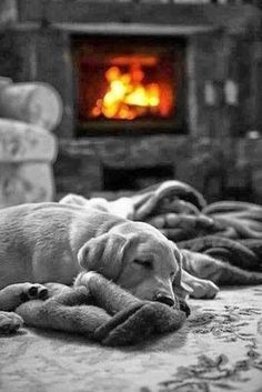 by a cozy fire .