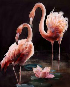 Daria Chacheva young artist from Krasnoyarsk. Discussion on LiveInternet - Russian Service Online diary Foto Flamingo, Flamingo Art, Pink Flamingos, Flamingo Painting, Bunny Painting, Beautiful Birds, Animals Beautiful, Flamingo Pictures, Black Canvas Paintings