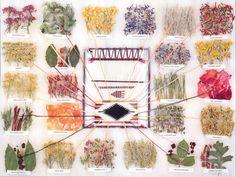 Waldorf ~ 3rd grade ~ Fibers & Clothing ~ Navajo Dye Chart with plants listed