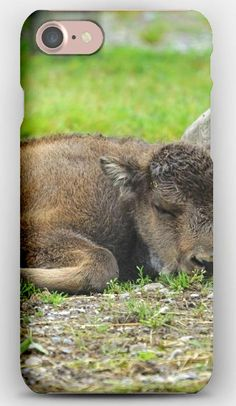 iPhone 7 Case Bison, Calf, Lying, Grass, Stone