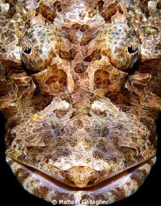 Crocodilefish portrait Komodo Indonesia