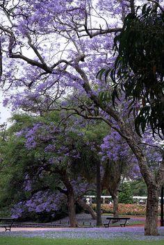 El Rosedal                                           PALERMO - BUENOS AIRES