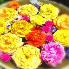 美女と野獣~なんてネーミングが合いそう��✨ ღღღ  #横浜イングリッシュガーデン  #薔薇  #roses  #flowergarden  #flowerslovers  #flowerpower  #instaflower  #flowerstagram  #beautifulflowers  #instaflowers  #lovenature  #loves_nippon  #loveflowers  #naturelovers  #写真は心のシャッター  #写真好きな人と繋がりたい  #写真撮ってる人と繋がりたい  #ファインダー越しの私の世界  #はなまっぷ  #はなまっぷ2017  #花フレンド  #花のある風景  #sunnydays  #beautifull  #canon  #canon_photos  #canonpowershot  #カメラ女子  #東京カメラガールズ  #お写ん歩 http://gelinshop.com/ipost/1521393224131797232/?code=BUdExOgD-Dw