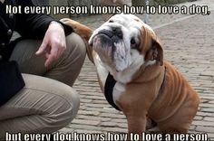 Every Dog Knows How To Love A Person