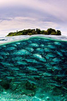 #MegaPlush  G de Grandioso.. Under the sea..!! Increible el agua cristalina.. Hasta parece que no es real, que opinan..??  Sipadan and jacks by liquidkingdom, via Flickr. Wow! Amazing!