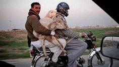 www.segurchollo.com  ¿Estan cubiertos los ocupantes con mi seguro de coche?