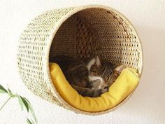 Basket Pet Bed: Use an IKEA woven basket, screw it into the wall and add a cushion for a stylish bed for our tiny besties. Via Row House Nest.