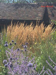 Echinops ritro and Perovskia 'Blue Spire' in front of a waving screen of Calamagrostis x acutiflora 'Karl Foerster' Soft Purple, Garden Spaces, Impressionist, Planting, Perennials, Garden Design, Shrubs, Ideas, Perennial