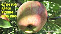 Looking for a great fall activity for the family? Go apple picking! Here are a few things that have helped make our adventures a success.