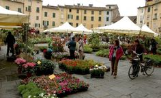 The flower market in Lucca