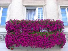 French balcony flowers - All About Balcony Balustrade Balcon, Fond Design, French Balcony, Paris Balcony, Balcony Flowers, Apple Decorations, Bougainvillea, Window Boxes, Flower Boxes