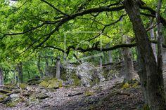 Wildnisgebiet im Mittelgebirge  - Gerade gefunden auf http://ronni-shop.fineartprint.de