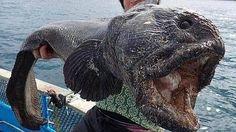 El pescador japonés Hirasaka Hiroshi, con su captura.