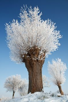 Covered in millions of minuscule, magical crystals.....Trees in Holland